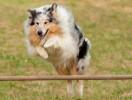 exercice_agility